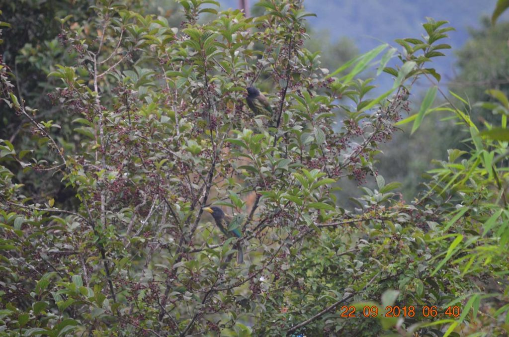 Bird watching kalsee eco lodge